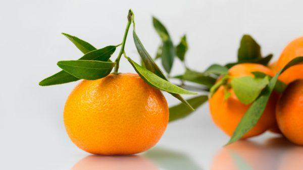 mandarino tardivo calabria