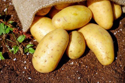 patate calabria sila 1